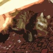 aslankral_kedi_oyun_DSC3605_cutout771_600.jpg